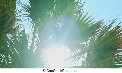 Sun rays in the leaves of a palm tree against the blue sky