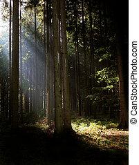 sun rays in the deep and dark wood