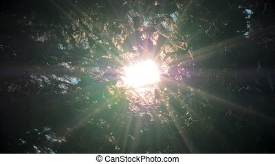 Sun rays light shines through apple tree and branches of...