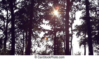 sun rays make their way through the trees in a pine park