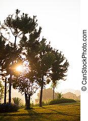 Sun rays  pass through the fog and tree