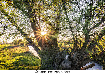 Sun rays penetrate a tree on a small river
