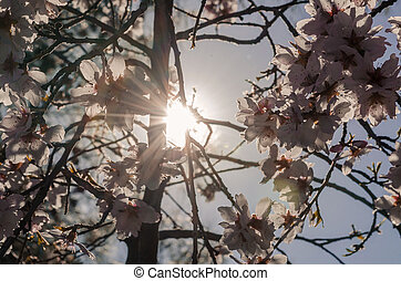 Sun rays seeping through the branches