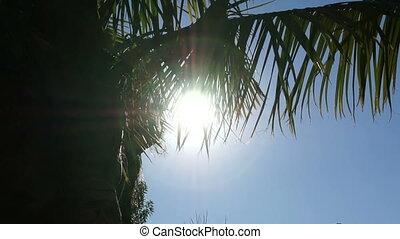sun rays Shine through the leaves - The sun's rays Shine...