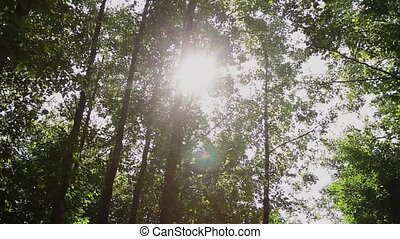 Sun rays shine through the trees in the park, sunlight...