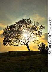 Sun Rays Through A Big Tree