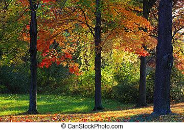 Sun rays through autumn trees