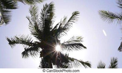 Sun Rays through Coconut Palm Tree. Slow Motion.