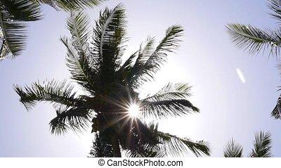 Sun Rays through Coconut Palm Tree. Slow Motion.
