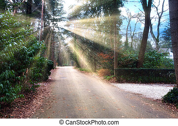 Sun rays through the trees in a street with many green trees on a sunny morning in the spring