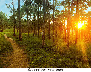 Sun rays through the trees in the park