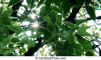 Sun Rays Through Tree Leaves