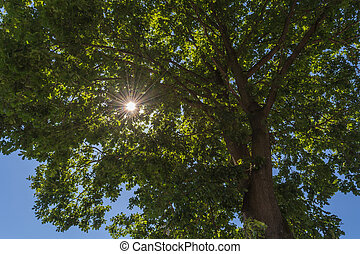 Sun rays through tree top.