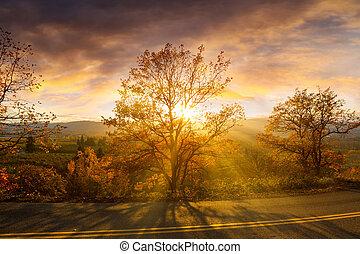 Sun Rays Through Trees During Sunset