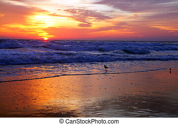 sun rise with bird at the ocean