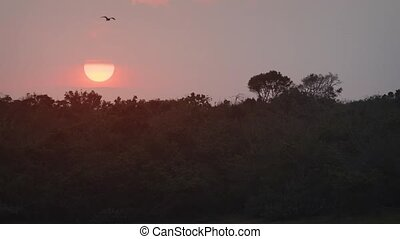 Sun Setting over the Wilderness at Yala National Park. 1080p...