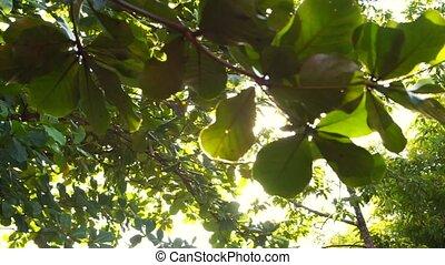 Sun shine through tree leaves slide