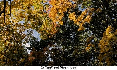 Sun shines rays through tree leaves