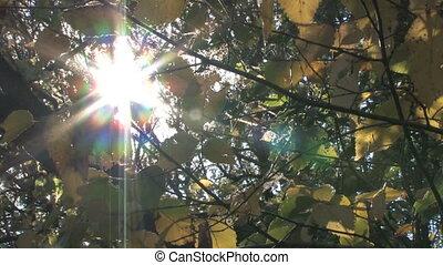 Sun Shines Through Branches