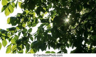Sun shines through green leaves