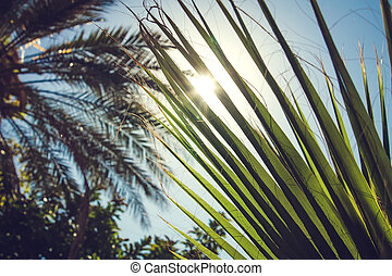 Sun shines through palm trees