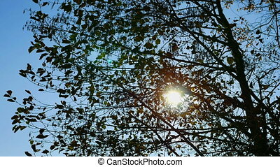 Sun shines through the branches of tree