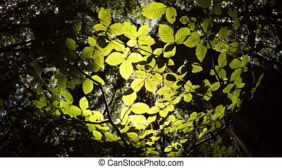 Sun shines through the green leaves in the forest