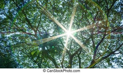 Sun shines through the leaves of a tropical tree