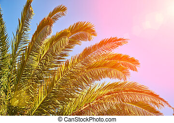 Sun shines through the palm tree branches