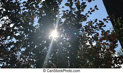 sun shines through the summer green bushes