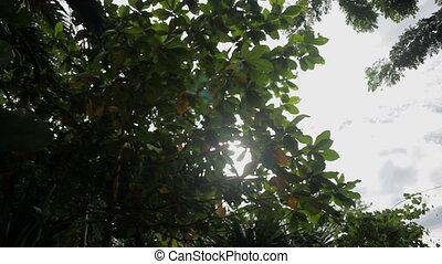 Sun shines through the tree's branches. Bangkok, Thailand.