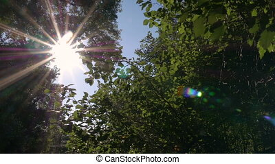 Sun shines through tree leaves