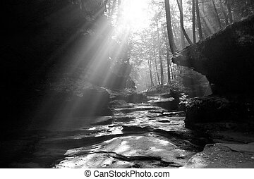 Sun shines through trees in rocky valley