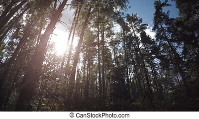 Sun Shines through Trees Revealing Pile of Cut Branches,...