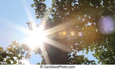 Sun shines through trees.
