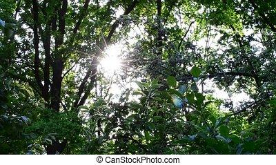 Sun shines through vibrant lush green foliage