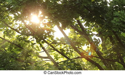 Sun shines through wet trees.