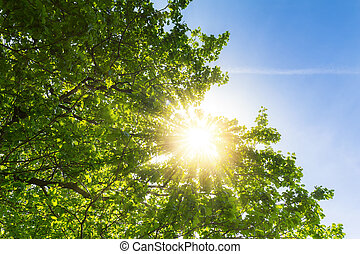 sun shining beautifully through treetops