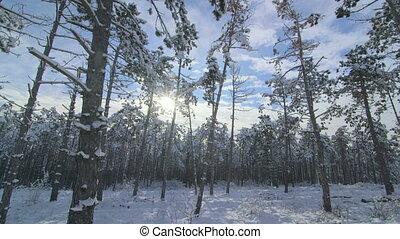 Sun shining between the trees