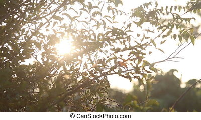 sun shining brightly through leaves at  sunrise