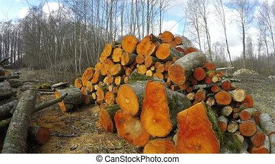 Sun shining on freshly cut orange alder firewood, time lapse...