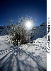 Sun shining on snow covered tree