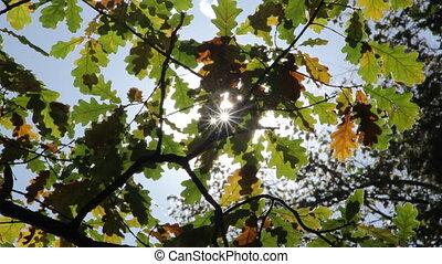 Sun shining through autumn leaves