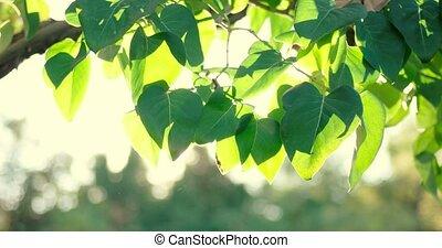 Sun shining through fresh leaves border