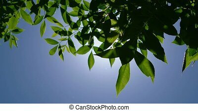 Sun shining through leaves on tree in summer afternoon a lot of space for text