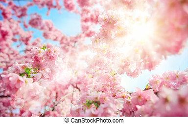 Sun shining through lush cherry blossoms