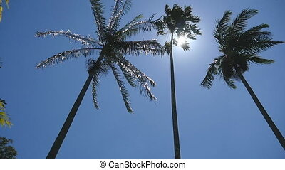 Sun shining through palm trees. The wind shakes the palm trees. Slow motion