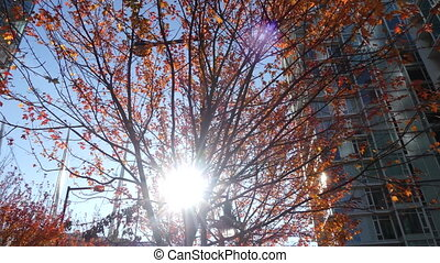 Sun shining through red autumn trees leaves modern city