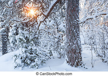 Sun shining through snowy tree
