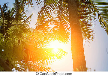 Sun shining through tall palm trees. Summer vacation background